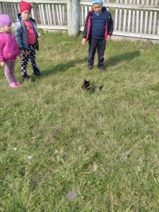Наблюдение за кошкой
